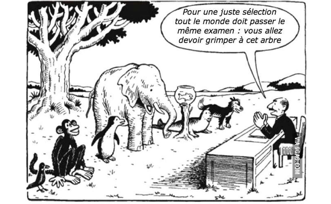 Pour une juste sélection, tout le monde doit passer le même examen : vous allez devoir grimper à cet arbre.