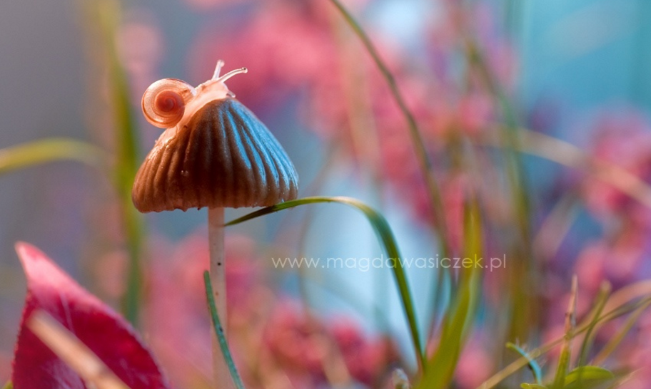 Photo de Magda Wasiczek